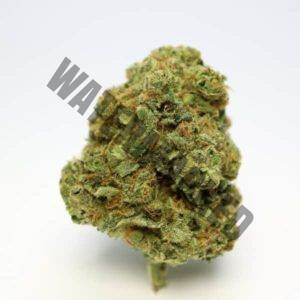 Romulan Indica Strains